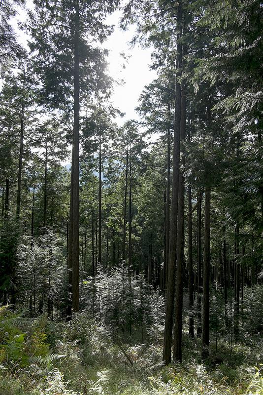 加子母森林エコツアー その1 「日本の森を守るために」地道な努力と課題を実感