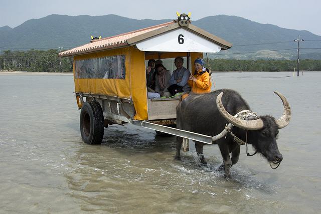 ぼくらのおきなわ離島大魔境ツアー2 水牛車で由布島へ