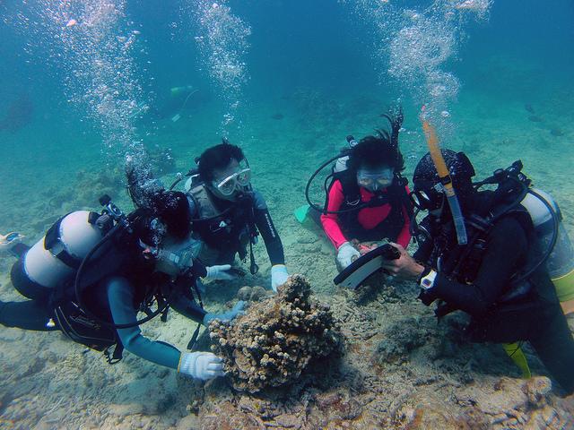 Surf Diveさんではじめての体験ダイビング コブシメやアオヤガラ、熱帯魚などに感動