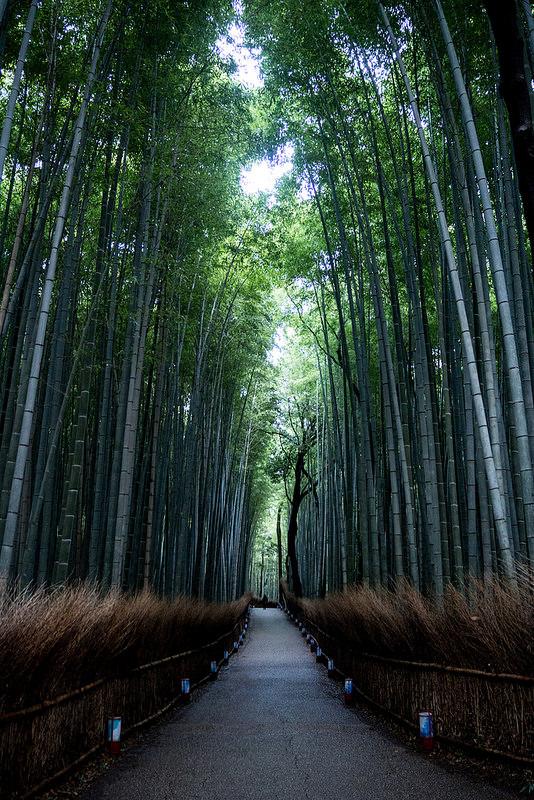 OLYMPUS OM-D E-M10 京都 嵐山の竹林と二条城の金魚