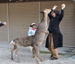 そうだ奈良へ行こう Nikon D90