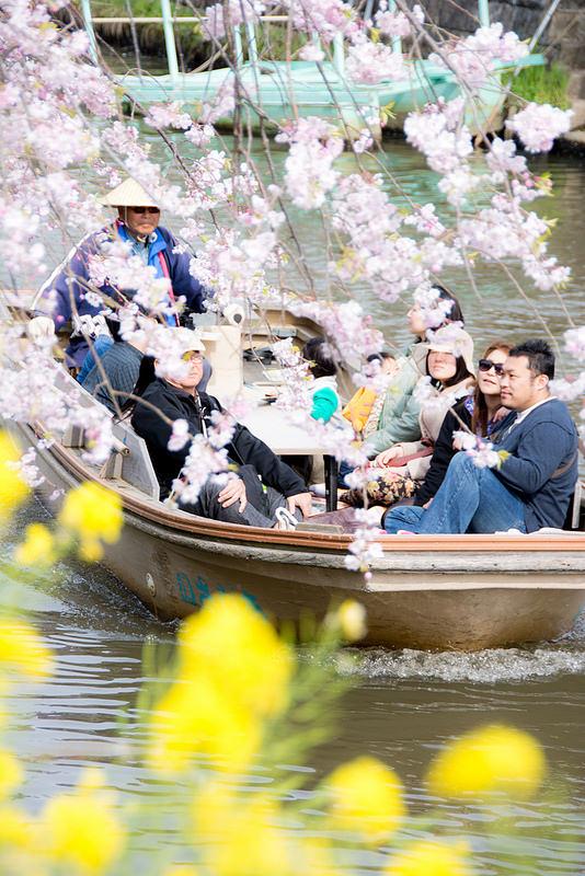 小江戸さわらサイクリング 舟と町並みと桜