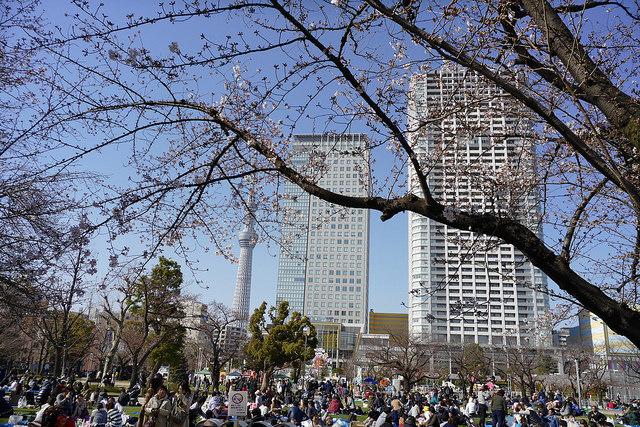 錦糸公園桜まつり開催 #CM10商品モニター中 #LUMIX