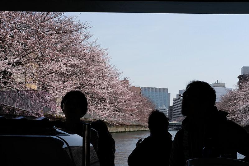 水の都東京なので船からお花見! すみだ江東お花見クルージング #ヤマハマリン #シースタイル