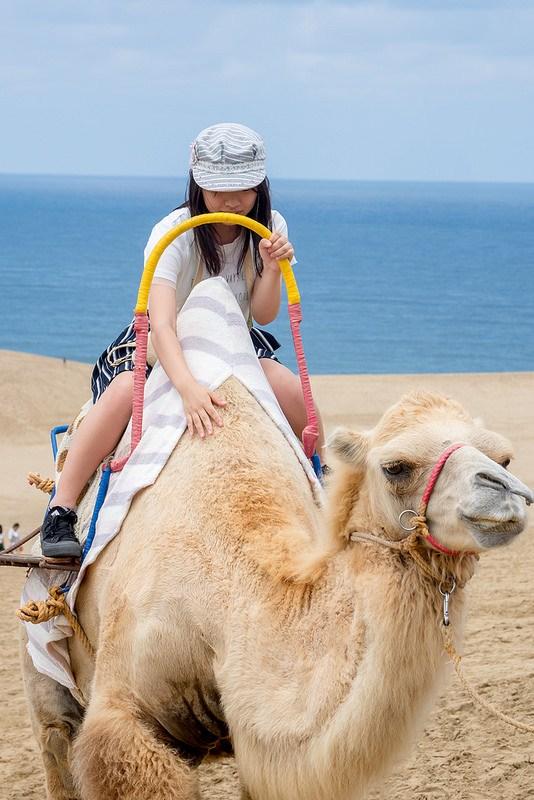 鳥取砂丘 ラクダと海と砂の山