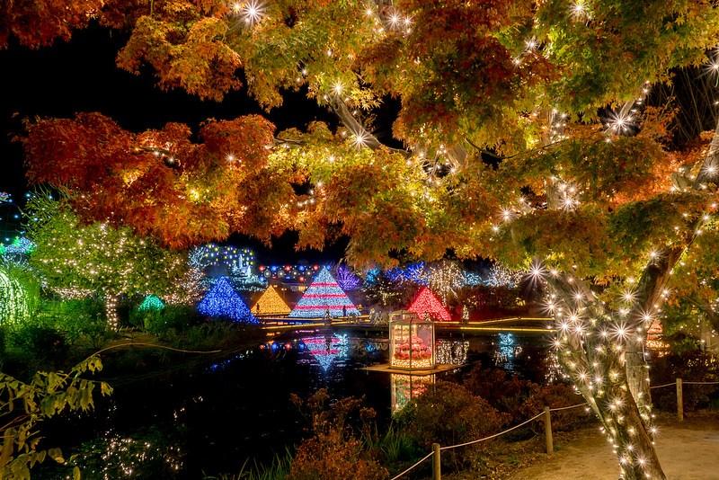 日本三大イルミネーションを撮影 あしかがフラワーパーク  光の花の庭 Flower Fantasy