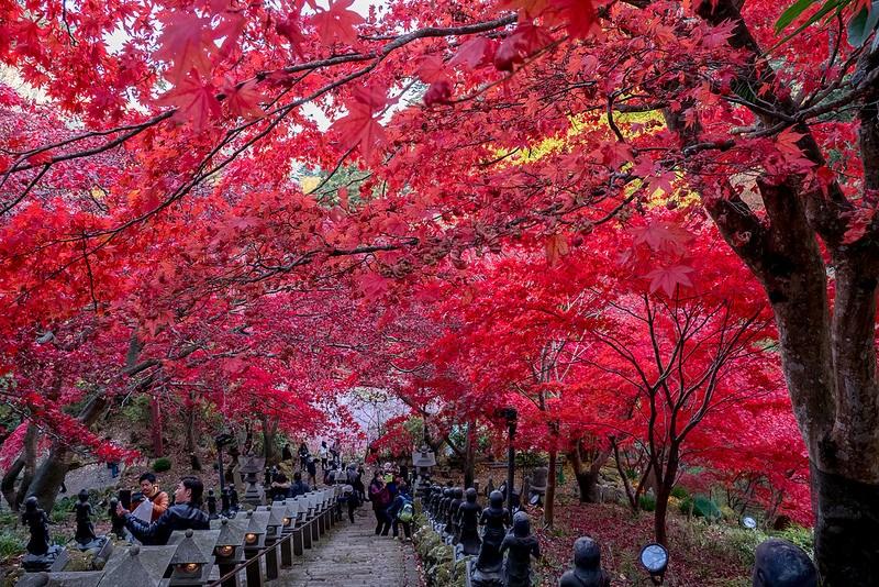 大山寺と大山阿夫利神社へ紅葉狩りへ