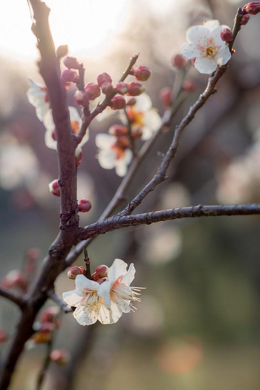 梅とお菓子とイルミネーション