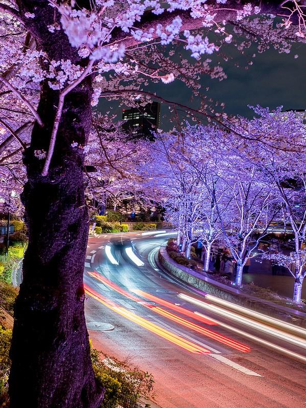 東京ミッドタウン 桜ライトアップ #Locketsリレー2018春 #桜