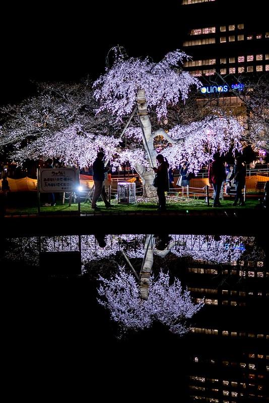 錦糸公園の夜桜 #Locketsリレー2018春 #桜