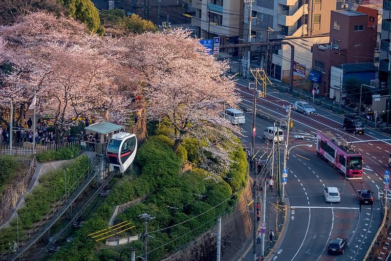 飛鳥山公園の桜 #Locketsリレー2018春 #桜