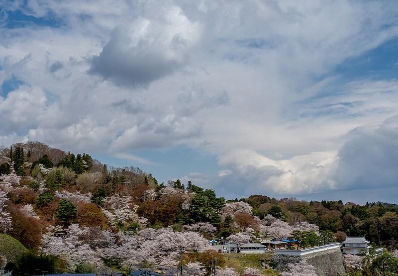 城山一面の桜となみえ焼きそば 霞ヶ城公園(二本松城) #Locketsリレー2018春 #桜 #こぶツアー