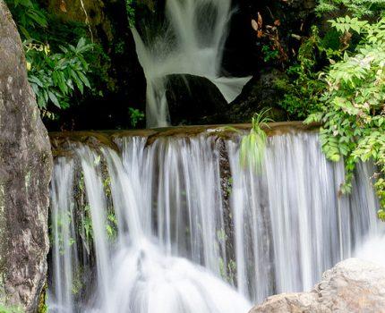 夏の緑の景色も素晴らしい 万博記念公園 日本庭園と自然文化園 フォトウォーク