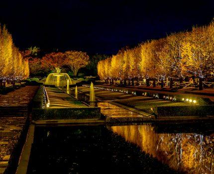立川 昭和記念公園 カナールイチョウライトアップ