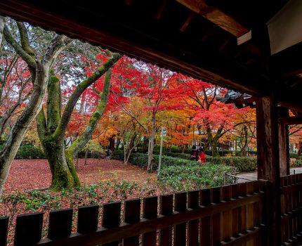 京都の紅葉めぐり 真如堂 本堂と渡り廊下の紅葉