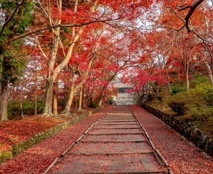 京都の紅葉めぐり 毘沙門堂門跡の紅葉の絨毯