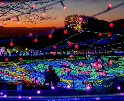 250万球の光に包まれる 東京ドイツ村 ウィンターイルミネーション #こぶツアー