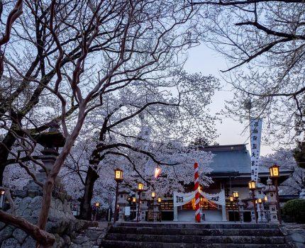 山梨桜巡り2019 幻想的な黄昏時の桜 妙了寺 #桜 #こぶツアー