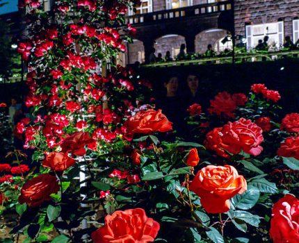 旧古河庭園 幻想的なバラと洋館のコラボ と日本庭園のライトアップ