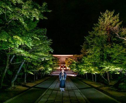 写真愛好家と文化財保護者の想いを繋ぐプロジェクト 京都 仁和寺 青もみじライトアップ #東京カメラ部