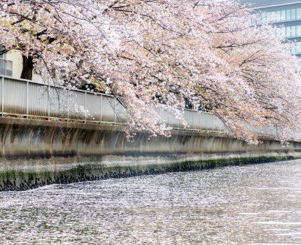 お花見クルージング2021 #桜 #勝どきマリーナ #シースタイル #seastyle #ヤマハ #ヤマハマリン