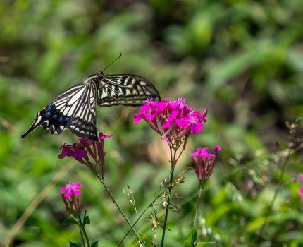 花と蝶と鳥を眺めながら散歩 東綾瀬公園と白鷺公園